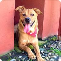 Adopt A Pet :: Cute Chester-VIDEO - Burbank, CA