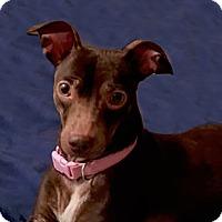 Adopt A Pet :: Bebe - San Francisco, CA