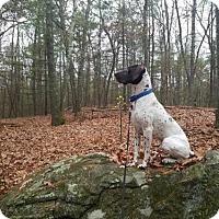 Adopt A Pet :: Gauge*Cross post - Oak Ridge, NJ