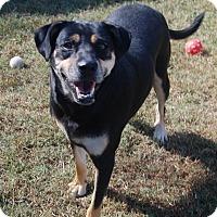 Adopt A Pet :: Brandy - Manning, SC