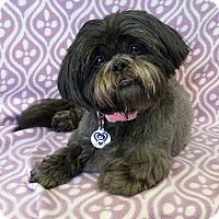 Adopt A Pet :: Tammy Miller - Urbana, OH