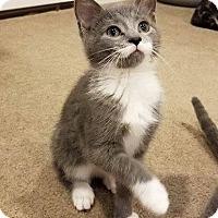 Adopt A Pet :: Sasha - Millersville, MD