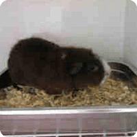 Adopt A Pet :: *Urgent* Butters - Fullerton, CA