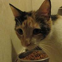 Adopt A Pet :: Bree - San Bernardino, CA
