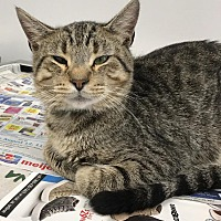 Adopt A Pet :: Tiggy - Angola, IN