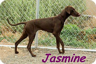Vizsla Mix Dog for adoption in McIntosh, New Mexico - Jasmine