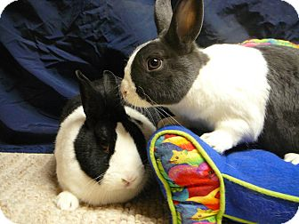 Dutch Mix for adoption in Newport, Delaware - Hayley and Harper