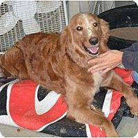 Adopt A Pet :: Faith - New Boston, NH