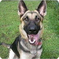Adopt A Pet :: Xena - Green Cove Springs, FL