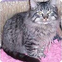 Adopt A Pet :: Captain Courageous - Andover, KS