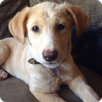 Adopt A Pet :: Yaya - Marietta, GA