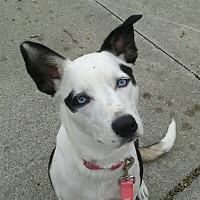 Adopt A Pet :: Rizza - Detroit, MI