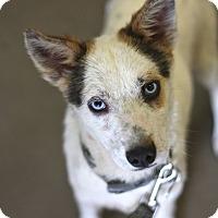 Adopt A Pet :: Nadine - Minneapolis, MN