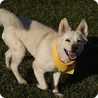 Adopt A Pet :: Cotton Beatty - Urbana, OH