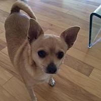 Adopt A Pet :: Marge - Scottsdale, AZ