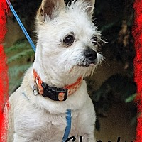 Adopt A Pet :: Colonel Chesty Puller - Riverside, CA