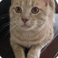 Adopt A Pet :: DEXTER - Washington, NC
