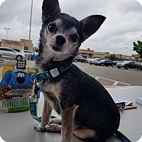 Adopt A Pet :: Squeak - Fairfield, OH