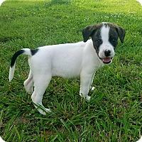 Adopt A Pet :: Nash - Columbia, TN
