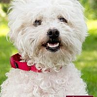Adopt A Pet :: Chanel - Marina del Rey, CA