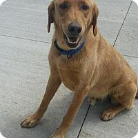 Adopt A Pet :: Elton - Princeton, KY