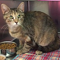 Adopt A Pet :: Wanda - Loudon, TN