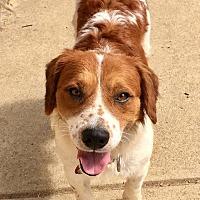 Adopt A Pet :: Levi - Sugar Grove, IL