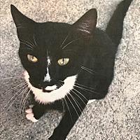 Adopt A Pet :: Kitten - Woodstock, VA