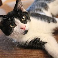 Adopt A Pet :: Crackle - Hazlet, NJ