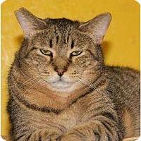 Adopt A Pet :: Fox - Metairie, LA