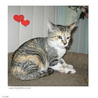 Adopt A Pet :: Lola - Catasauqua, PA