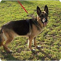Adopt A Pet :: Colonel - Green Cove Springs, FL