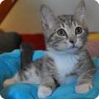 Adopt A Pet :: Garth - Port Republic, MD
