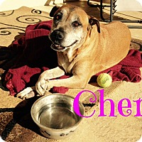 Adopt A Pet :: Cher (Courtesy Post) - Scottsdale, AZ