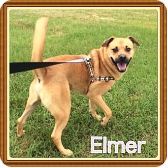 Beagle/Labrador Retriever Mix Dog for adoption in Haggerstown, Maryland - Elmer
