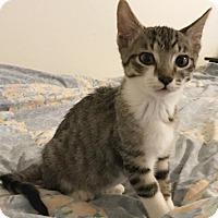 Adopt A Pet :: Toro - North Highlands, CA