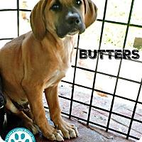 Adopt A Pet :: Butters - Kimberton, PA