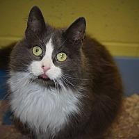 Adopt A Pet :: Croissant - Pottsville, PA