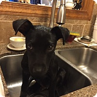 Adopt A Pet :: Jackson - Doylestown, PA