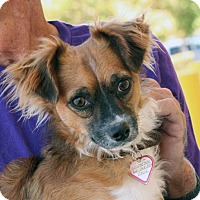Adopt A Pet :: Fly - Palmdale, CA