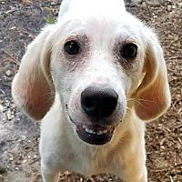 Adopt A Pet :: Legend - Melrose, FL