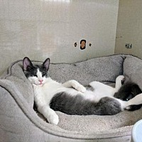 Adopt A Pet :: Wendy - Littleton, CO