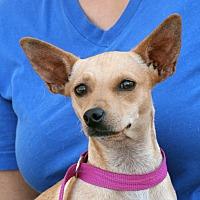 Adopt A Pet :: Zoe - Palmdale, CA