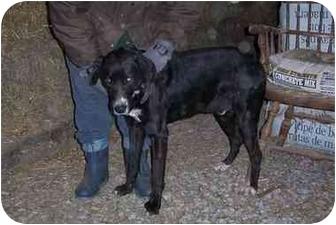 Retriever (Unknown Type)/Hound (Unknown Type) Mix Dog for adoption in Woodsfield, Ohio - Buddie