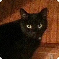 Adopt A Pet :: Steve - Wheaton, IL