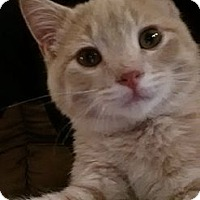 Adopt A Pet :: Flounder - Clearfield, UT