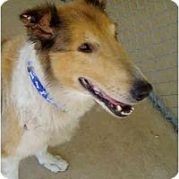 Adopt A Pet :: Buddy - Gardena, CA