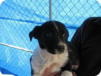 Boxer Mix Puppy for adoption in Danbury, Connecticut - Tank