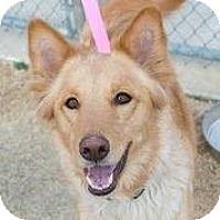 Adopt A Pet :: Loki - Irving, TX