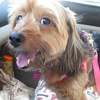 Adopt A Pet :: LOLA - Jacksonville, FL